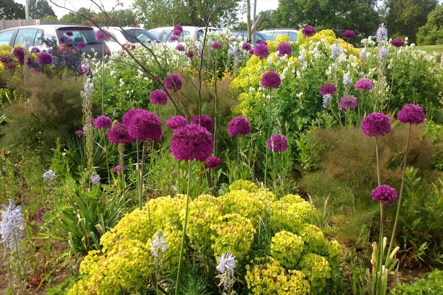 Alliums and Euphorbias